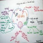 Đề thi và đáp án môn Sinh khối B