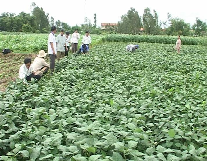 trồng rau mùa mưa