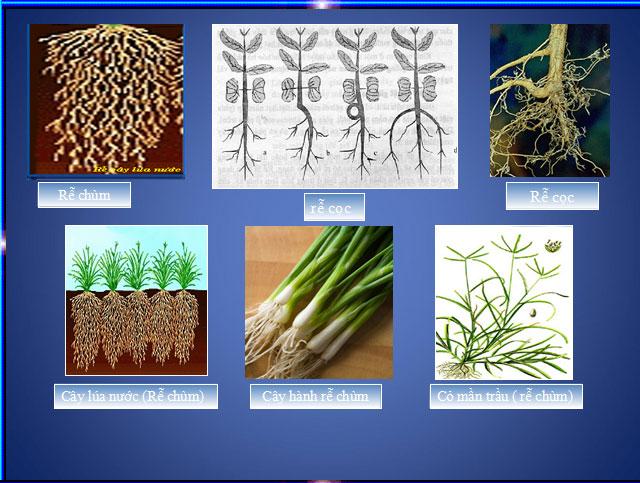 Cấu tạo miền hút của rễ