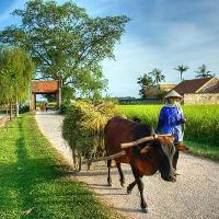 Điều kiện công nhận địa phương đạt chuẩn nông thôn mới